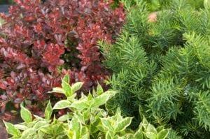 Plants Omaha