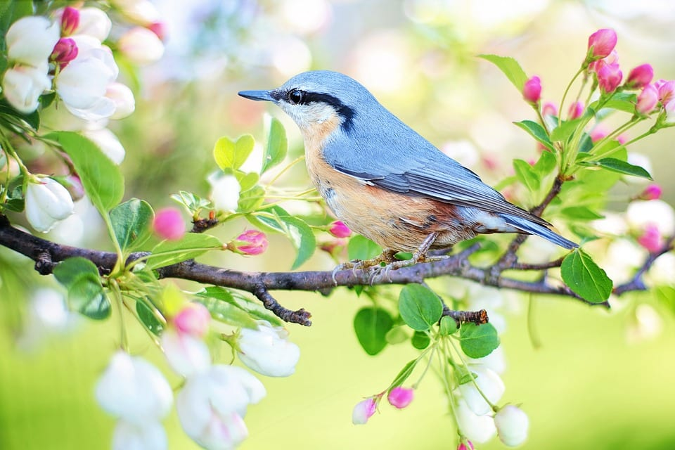 Spring Landscaping: Types Of Flowering Trees To Plant In Omaha
