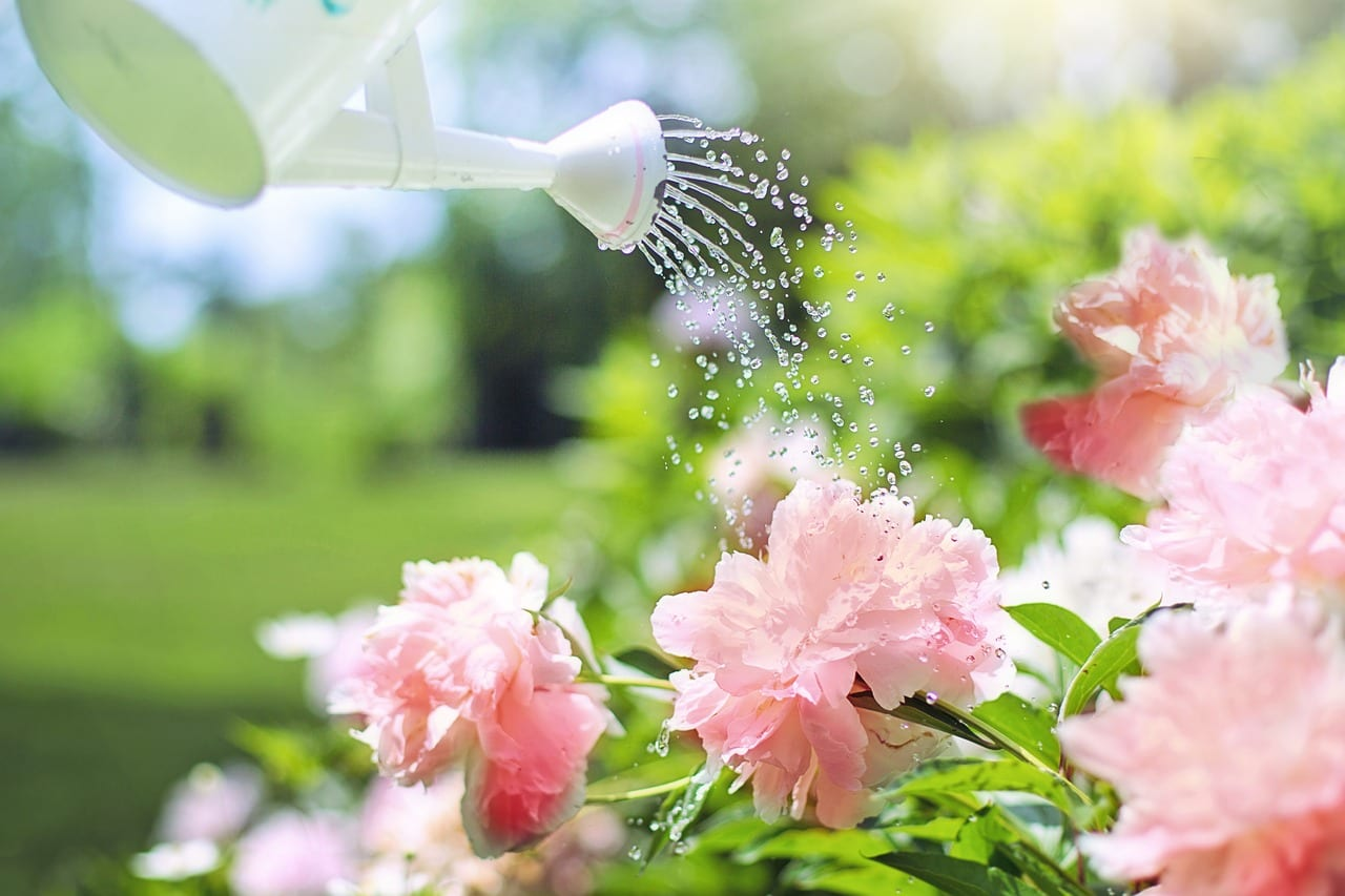 Watering in the Fall: Why It's Good for Your Plants