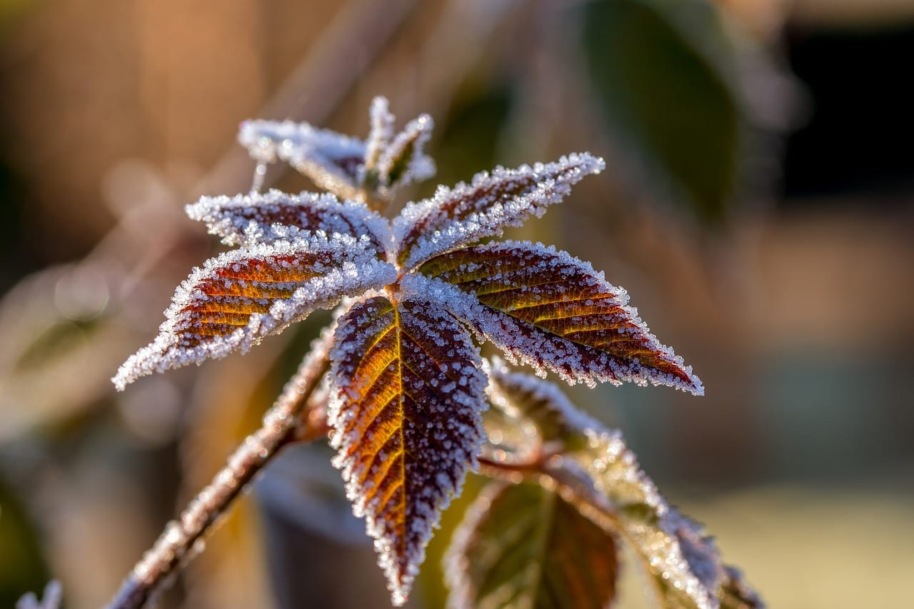 protecting trees & Shrubs in the winter cold