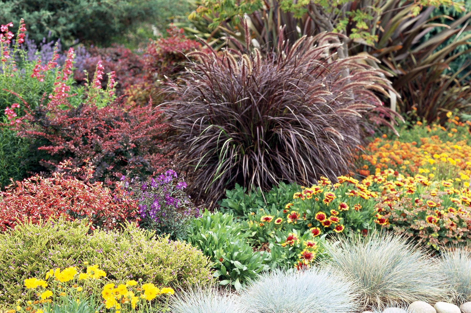 Ornamental Grasses Omaha Landscaping