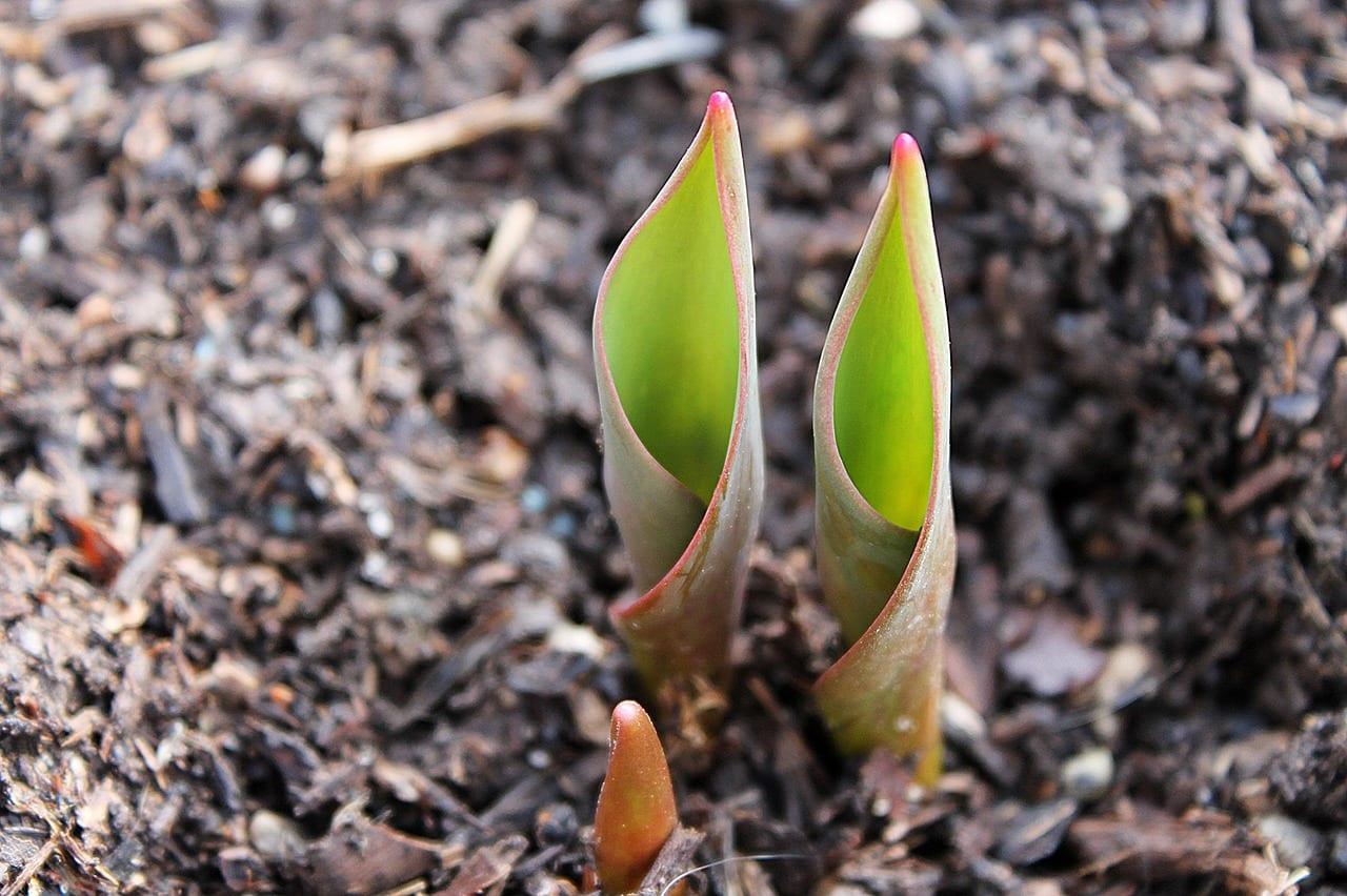 November Landscaping Tips