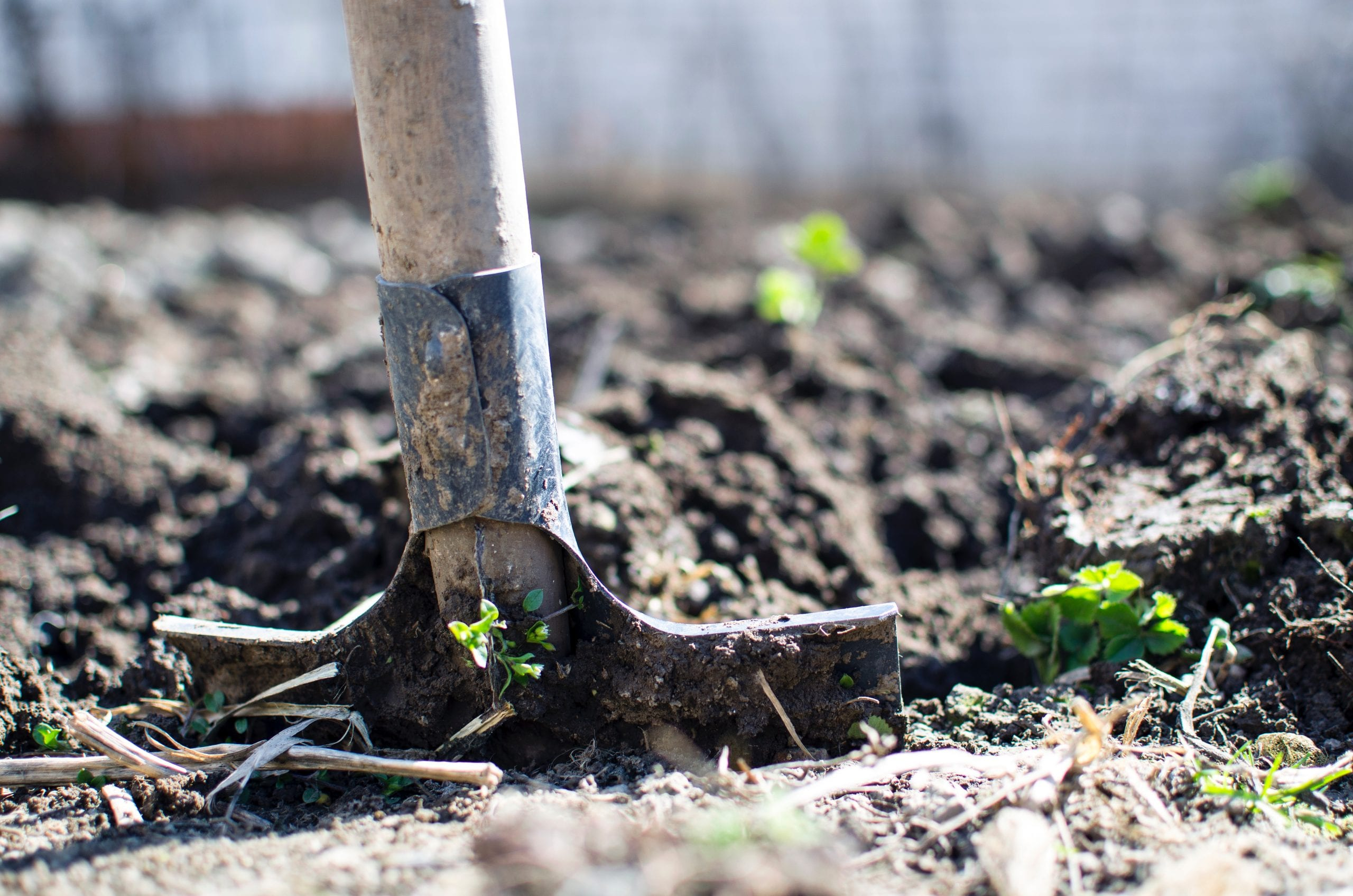 Landscaping Spring Cleaning Tips