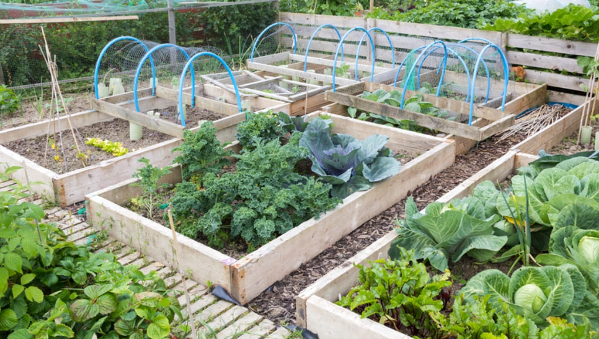 Why Now is the Time to Create a Home Vegetable Garden